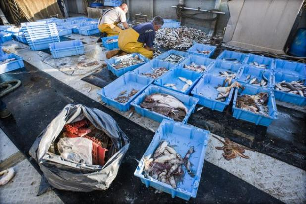 El 44% de los pescadores ya hace uso de algún método o participa en proyectos de pesca de basura marina
