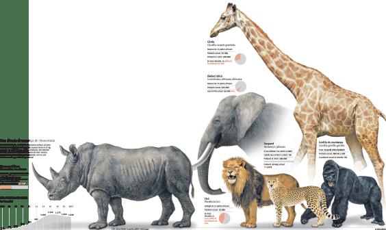 Algunas de las especies de gran fauna en peligro de extinción