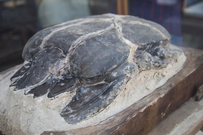 Momia de un escarabajo gigante