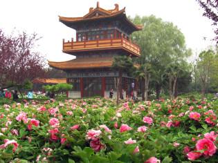 Giardino delle Peonie a Luoyang