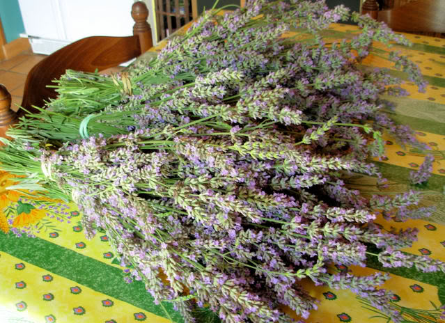 Bunches of lavender waiting to be hung up