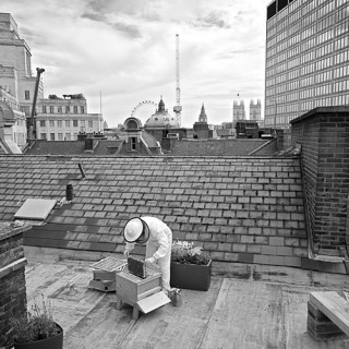 Urban Bee Keeping on top of St Ermin's Hotel