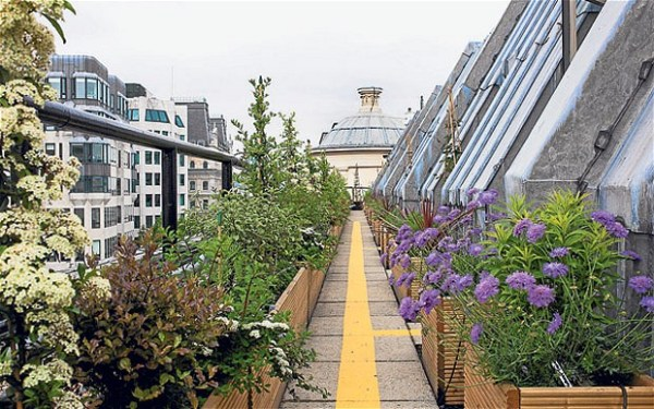 Coutts's skyline garden