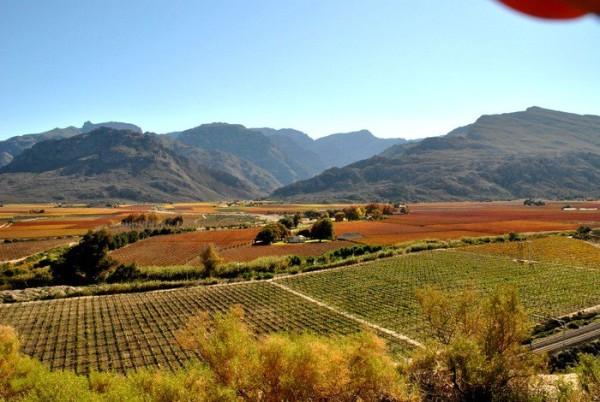 Vinyards in the Hex Valley