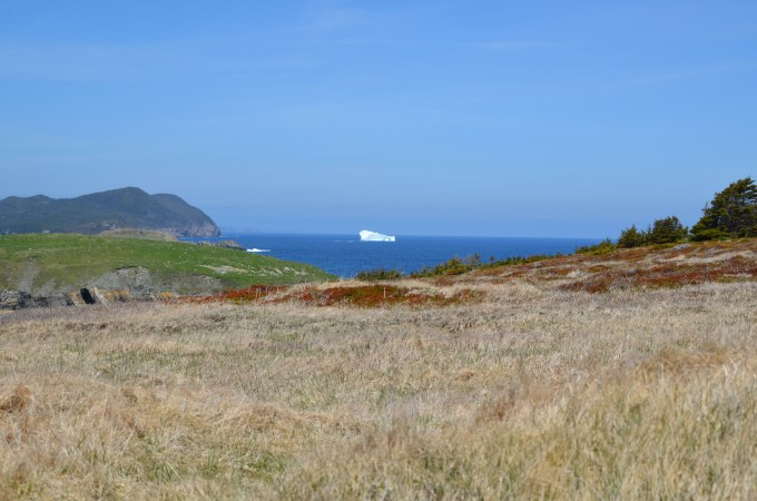 Ferryland, NL and an Iceberg