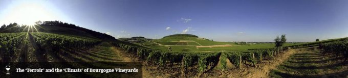 Bourgogne Vineyards