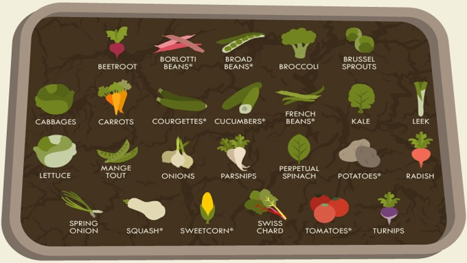 The Spring Allotment and Garden: A Vegetable Growing Guide Cheat Sheet