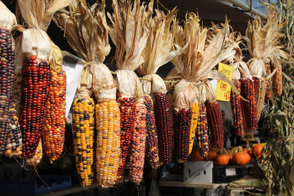 Drying Indian Corn