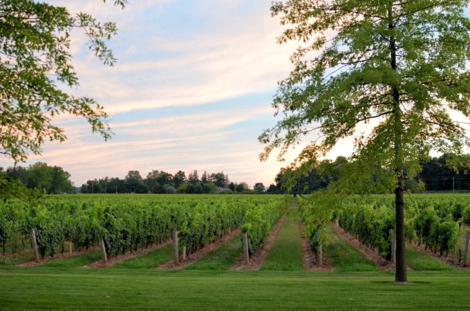 Two Sisters Vineyard