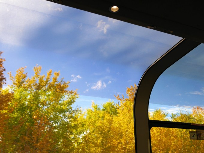 A Blaze of Fall Leaves out of the Panorama Window