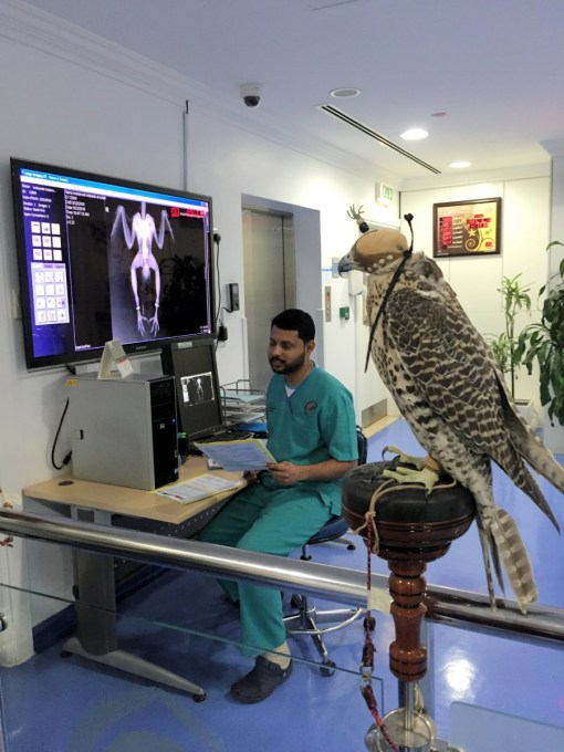 Falcon Hospital Doha Qatar