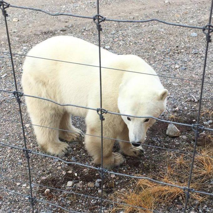 female-bear-visiting-us