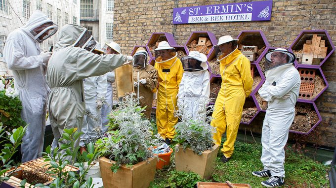 St Ermin's Hotel Bee Hives