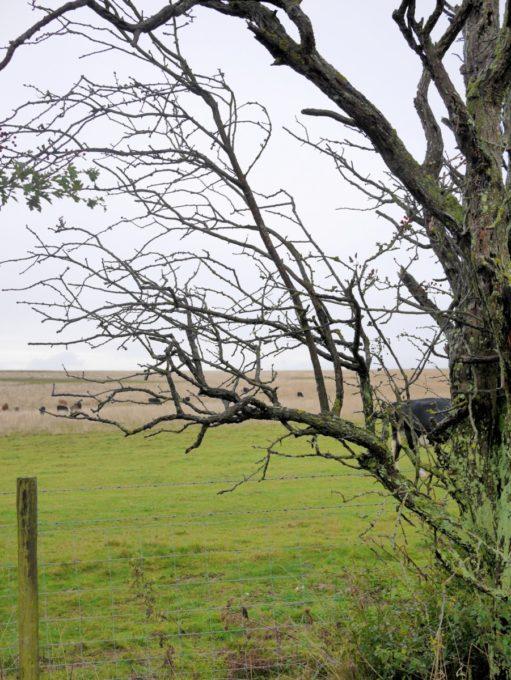 Ancient landscape Stonehenge