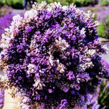 U-Cut bouquet