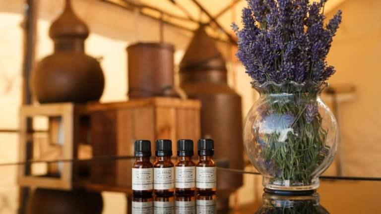 Lavender Essential Oil Distillation