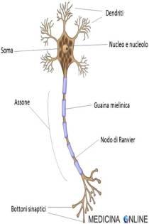 Composizione di un Neurone
