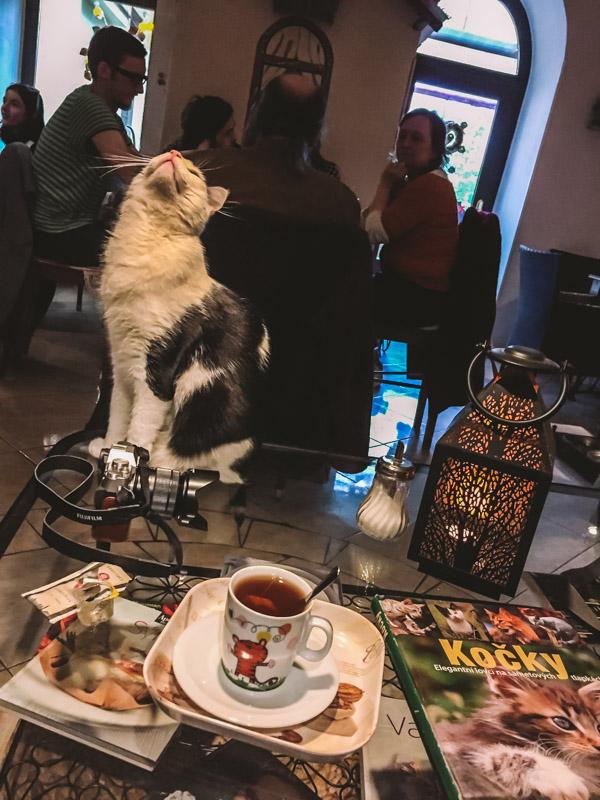 cat cafe a praga