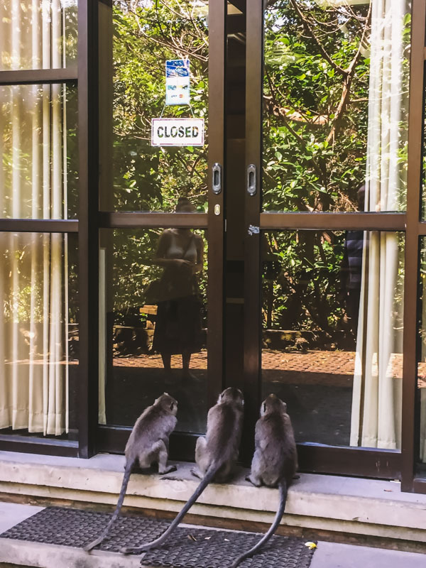 foresta delle scimmie ubud