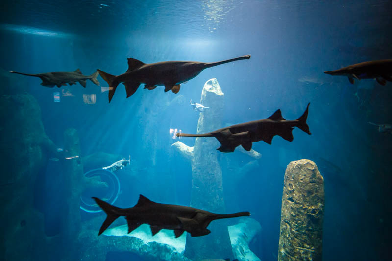 acquario d'acqua dolce più grande d'europa aquario losanna