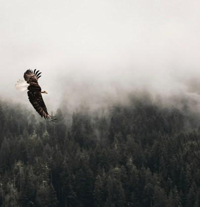 Il falco che non poteva volare, un insegnamento buddista per uscire dalla comfort zone