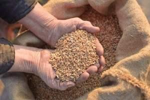 mani-grano