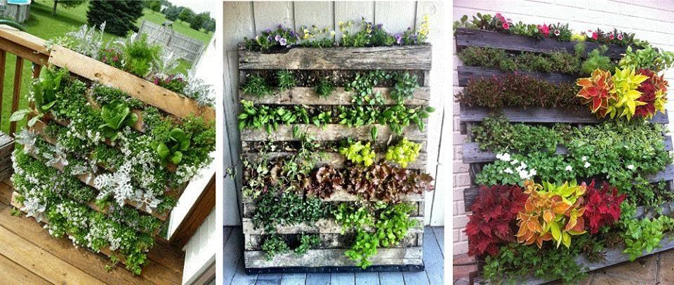 Beneficios de un jardn vertical con hierbas