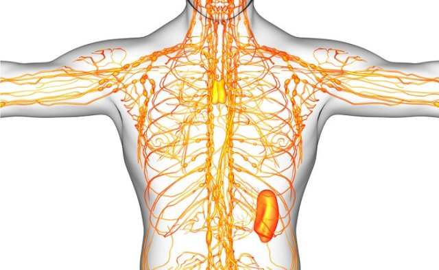 how to clean the lymphatic system