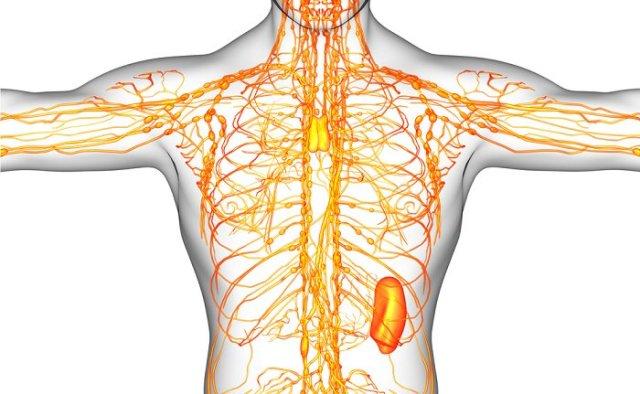 comment nettoyer le système lymphatique