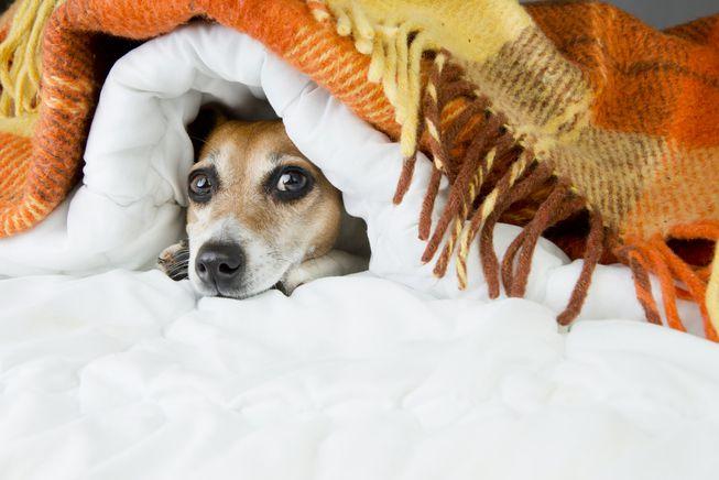 la pirotecnia y los perros