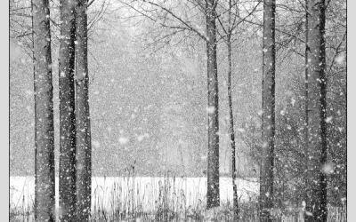 Tombe la neige …