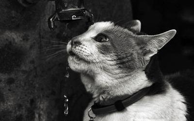 Le Gardien de l'Observatoire