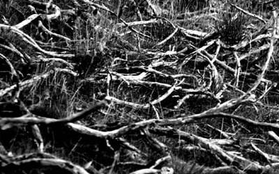 Cimetière de branches