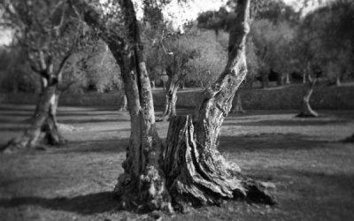 Monsieur l'arbre