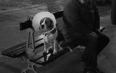 Une vie de chien …