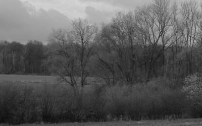 Les arbres devant la forêt