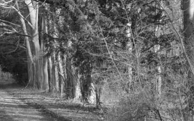 Le chemin sous les arbres