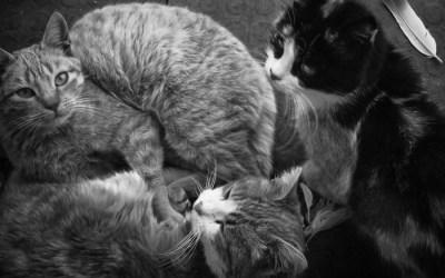 Vous ne pensez qu'a chat…(2)