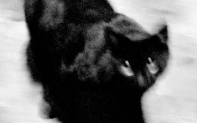la nuit tous les chats …