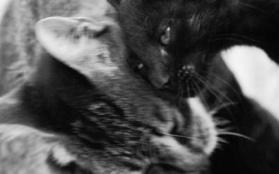 Histoires de Chats – 6