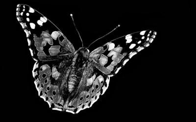 Un papillon noir