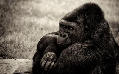 Pensive . . .