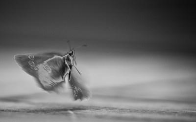 L'esprit du papillon