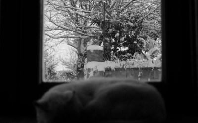 L'hiver et le chat