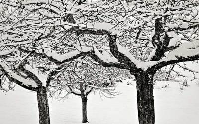 Trio en noir et blanc