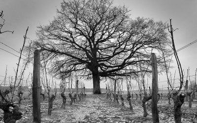 Sologne viticole, 2004