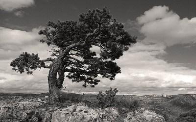 l'arbre (V2)
