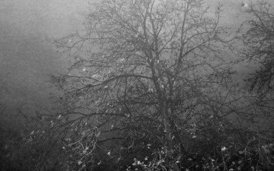 L'arbre à perruches