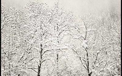 Dernier chant d'hiver – Winter last song