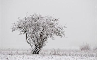 souvenir d'hiver